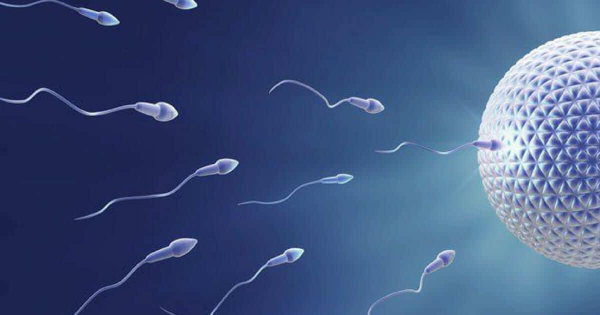 A qualidade dos espermatozoides é influenciada pela ingestão de nozes, diz estudo