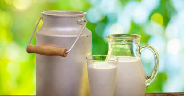 O leite faz mal para saúde?