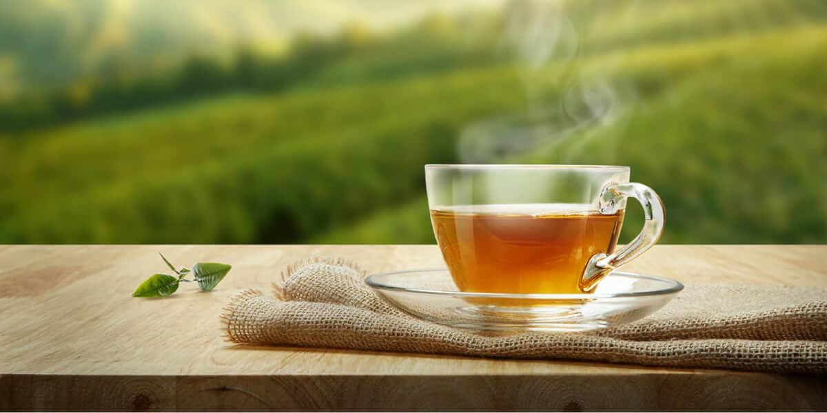 Por que o chá verde é a melhor bebida do mundo?