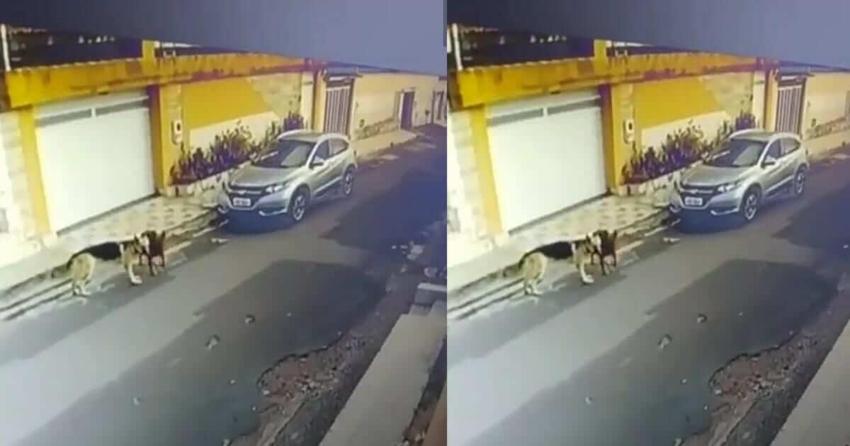 O Caso da Enfermeira que atropelou dois cachorros nesta semana