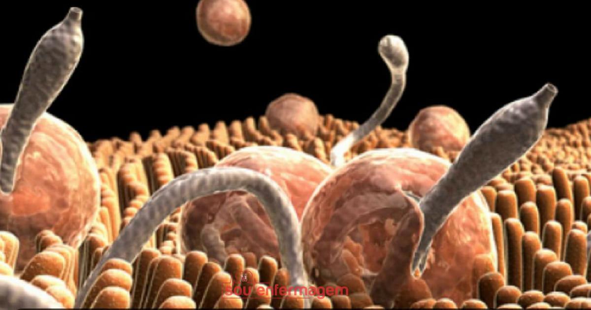 Parasitoses Intestinais na Gravidez