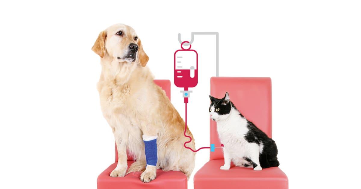 Transfusão de sangue pode ser feita em cães e gatos