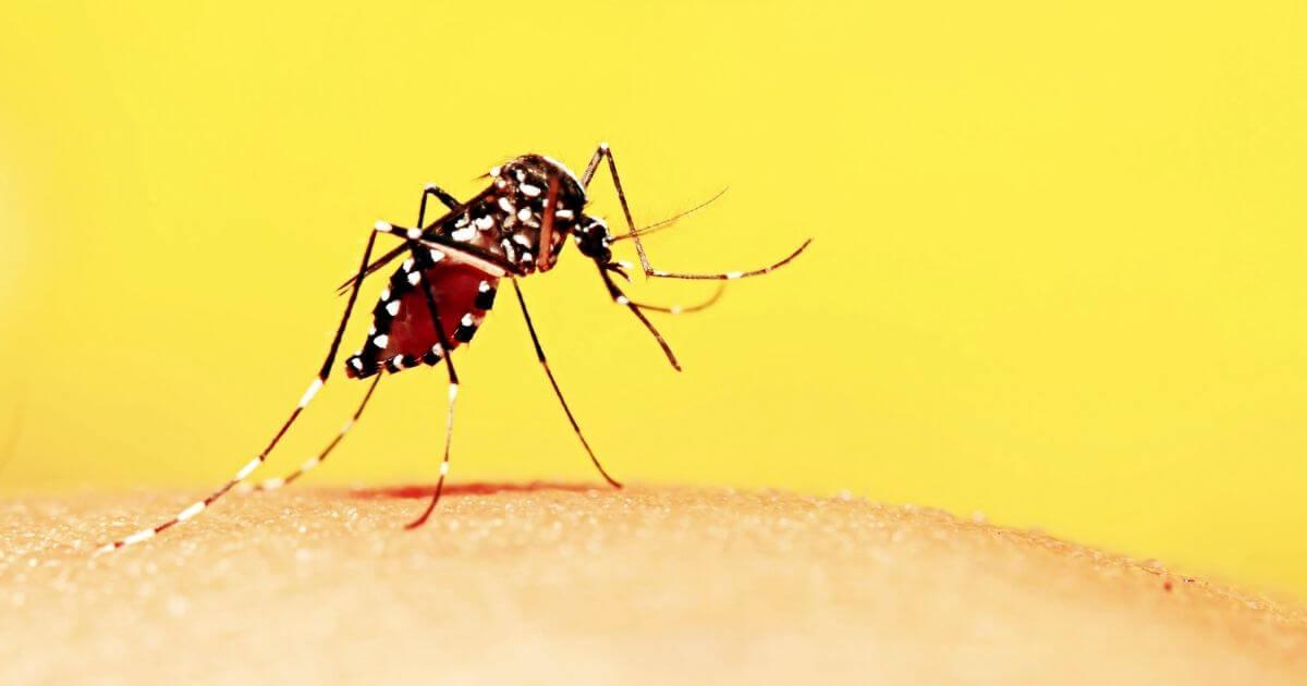 O que é Zika Vírus e quais as suas causas, sintomas, tratamento, diagnóstico e prevenção